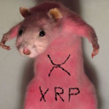 Хомяк с XRP