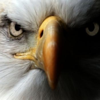 Mining Eagle