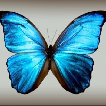 Ёна 나비
