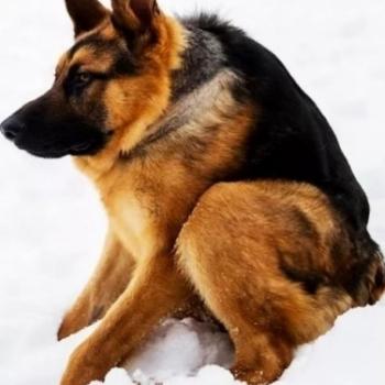 Собака Сутулая