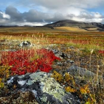 Tundra Way